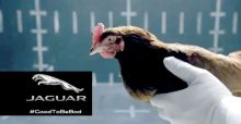VIDEO: Jaguar vs Huhn  - Jaguar parodiert Mercedes-Werbung